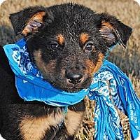 Adopt A Pet :: Nick - Gonzales, TX