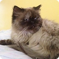 Adopt A Pet :: Mei Ling - Cleveland, OH