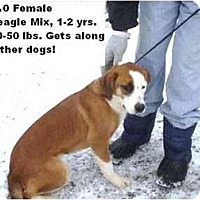 Adopt A Pet :: # 634-10 - ADOPTED! - Zanesville, OH