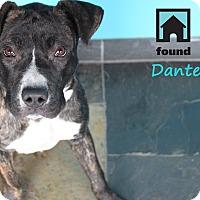 Adopt A Pet :: Dante - Chicago, IL