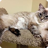 Adopt A Pet :: Asia - Deerfield Beach, FL