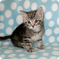 Adopt A Pet :: Alexander Hamilton - Union, KY