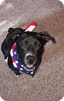 Labrador Retriever/Pit Bull Terrier Mix Dog for adoption in Grand Ledge, Michigan - Mia