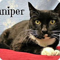 Adopt A Pet :: Juniper` - Melbourne, KY