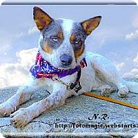 Adopt A Pet :: Hooper adoption pending - Sacramento, CA