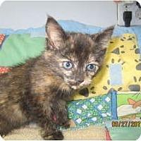 Adopt A Pet :: Aisha (very vocal) - Sterling Hgts, MI