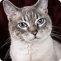 Adopt A Pet :: Sarabi - Eagan, MN