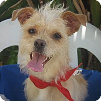Adopt A Pet :: Auggie-WATCH MY VIDEO!!!! - Irvine, CA