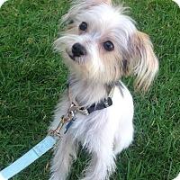 Adopt A Pet :: Oscar - Redondo Beach, CA