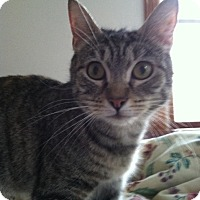 Adopt A Pet :: Miracle - Trevose, PA