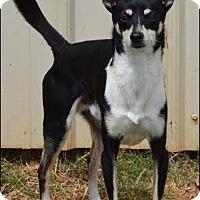 Adopt A Pet :: Brodie - Homewood, AL
