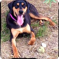 Adopt A Pet :: Lula Bell - Bastrop, TX
