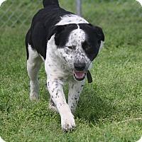 Adopt A Pet :: JAKE - Gustine, CA