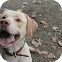 Adopt A Pet :: Simba - Wallaceburg, ON