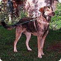 Adopt A Pet :: Keeli - Hamilton, ON