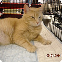 Adopt A Pet :: Timmy - Riverside, RI