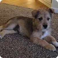 Adopt A Pet :: Fozzie - Houston, TX