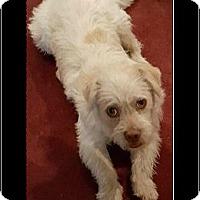 Adopt A Pet :: Walter - Rancho Cucamonga, CA