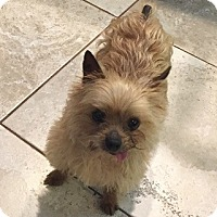 Adopt A Pet :: Tigger - Beavercreek, OH