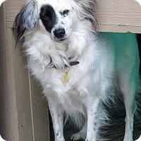 Adopt A Pet :: Curly - Seattle c/o Kingston 98346/ Washington State, WA