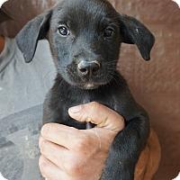 Adopt A Pet :: Harold - Oviedo, FL