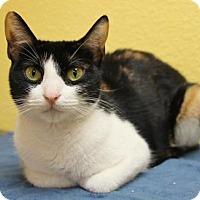 Adopt A Pet :: Ellie - Benbrook, TX