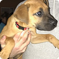 Adopt A Pet :: Wyatt - Patterson, NY