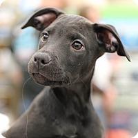 Adopt A Pet :: Electra - CUMMING, GA