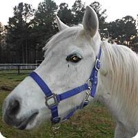 Adopt A Pet :: Abby - Chapel Hill, NC