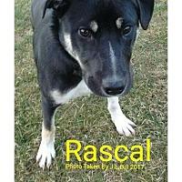 Adopt A Pet :: Rascal - Bay City, MI