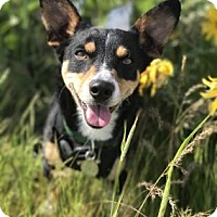 Adopt A Pet :: Bandit - The Dalles, OR