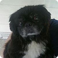 Adopt A Pet :: Prince  (in Huntington, WV) - Vansant, VA