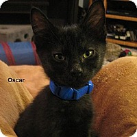 Adopt A Pet :: Oscar - Portland, OR
