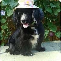 Adopt A Pet :: Tatum - Kingwood, TX