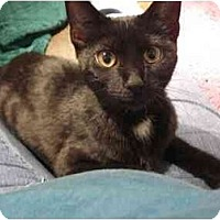 Adopt A Pet :: Cricket - Chesapeake, VA