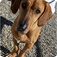Adopt A Pet :: Elise - Courtesy - Indianapolis, IN