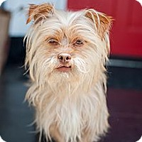 Adopt A Pet :: Mc Lovin - Santa Monica, CA