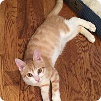 Adopt A Pet :: clover - Birmingham, AL