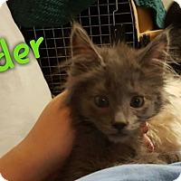 Adopt A Pet :: Gander - McDonough, GA