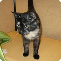 Adopt A Pet :: Mama Cat - Bulverde, TX