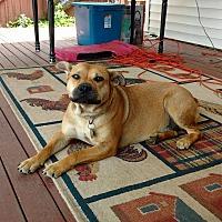 Adopt A Pet :: Cindy - Sharon Center, OH