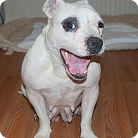 Adopt A Pet :: Betty Lou - Atlanta, GA