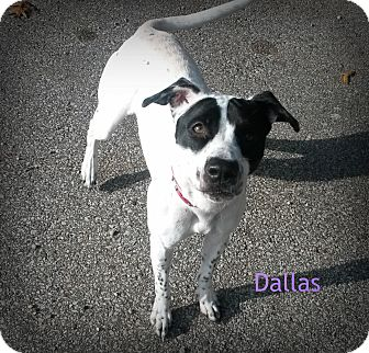 Spaniel (Unknown Type) Mix Dog for adoption in Muskegon, Michigan - Dallas