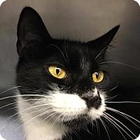 Adopt A Pet :: Melanie-PetSmart - Voorhees, NJ