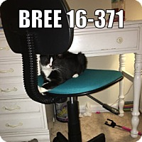 Adopt A Pet :: 16-371 Bree - York County, PA