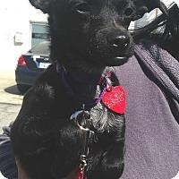 Adopt A Pet :: REINA - Los Angeles, CA