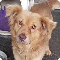 Adopt A Pet :: BB - Gustine, CA
