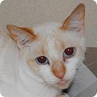 Adopt A Pet :: Asha - Chesapeake, VA