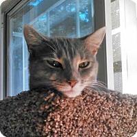 Adopt A Pet :: Pixie - McDonough, GA