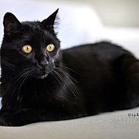 Adopt A Pet :: Jet - Eagan, MN